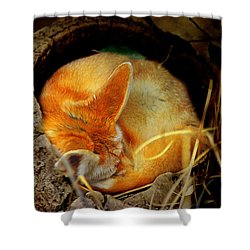 Napping Fennec Fox Shower Curtain