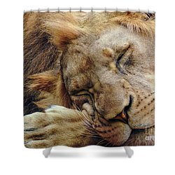 Napping Shower Curtain by Lisa L Silva