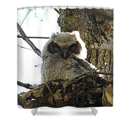 Napping Owl Shower Curtain