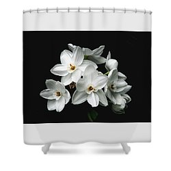 Narcissus The Breath Of Spring Shower Curtain by Angela Davies