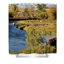 National Bison Range Shower Curtain by Cindy Murphy - NightVisions