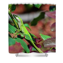 Native Anole Shower Curtain