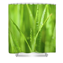 Native Prairie Grasses Shower Curtain by Steve Gadomski