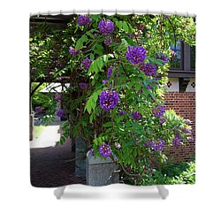 Native Wisteria Vine I Shower Curtain