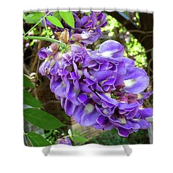 Native Wisteria Vine II Shower Curtain