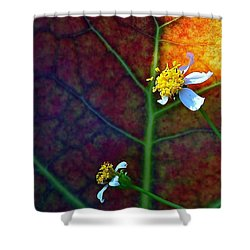 Natural 10 17g Shower Curtain