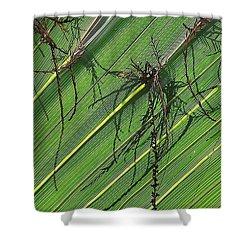 Natural 11 15b Shower Curtain