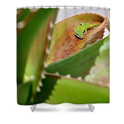 Natural 3 14 Shower Curtain