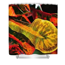 Natural 9 17c Shower Curtain