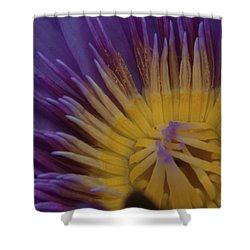 Natural Colors Shower Curtain