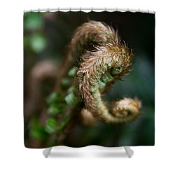 Shower Curtain featuring the photograph Natural Fiddlehead by Erin Kohlenberg
