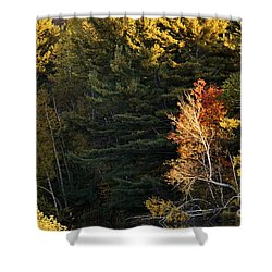 Shower Curtain featuring the photograph natural Framing by Aimelle