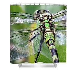 Natural Stained Glass Shower Curtain by Carol Groenen