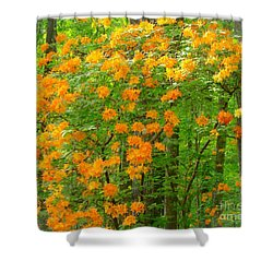 Natural Wild Azaleas  Shower Curtain