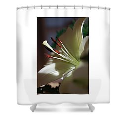 Naturally Elegant Shower Curtain