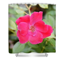 Shower Curtain featuring the photograph Nature - Colorful Flower Gifts  by Ray Shrewsberry