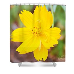 Shower Curtain featuring the photograph Nature Colorful Flower Gifts - Yellow by Ray Shrewsberry