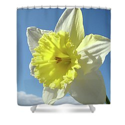 Nature Daffodil Flowers Art Prints Spring Nature Art Shower Curtain by Baslee Troutman
