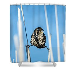Shower Curtain featuring the photograph Nature's Circus by Steven Santamour