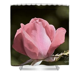 Shower Curtain featuring the photograph Nature's Gems by Brenda Bostic