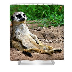 Natures Lazy Boy Shower Curtain by Lana Trussell