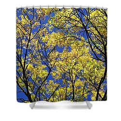Shower Curtain featuring the photograph Natures Magic - Original by Rebecca Harman