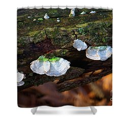Shower Curtain featuring the photograph Natures Ruffles - Cascade Wi by Mary Machare