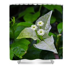 Nature's Triplets Shower Curtain by Christopher L Thomley