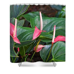 Naural Asapanthus Flowers Shower Curtain