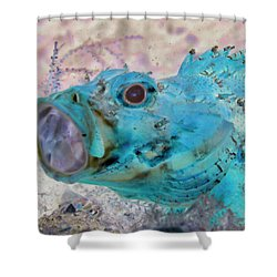 Shower Curtain featuring the photograph Nautical Beach And Fish #1 by Debra and Dave Vanderlaan