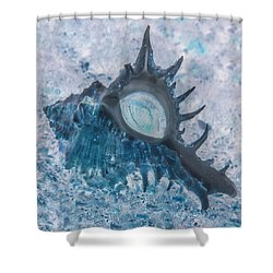 Shower Curtain featuring the photograph Nautical Beach And Fish #13 by Debra and Dave Vanderlaan