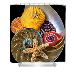 Nautilus With Sea Shells Shower Curtain by Garry Gay