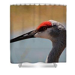 Nebraska Sandhill Crane Shower Curtain