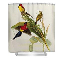 Nectarinia Gouldae Shower Curtain by John Gould