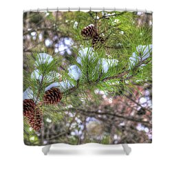 Needles And Cones Shower Curtain
