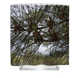 Needles Attached Shower Curtain by Roberta Byram