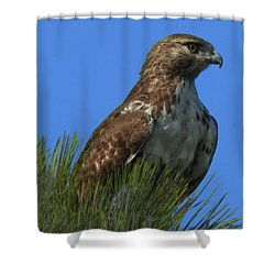 Neighborhood Look Out Shower Curtain by Laura Ragland