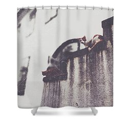 Neighbors Cats Shower Curtain by Siegfried Ferlin