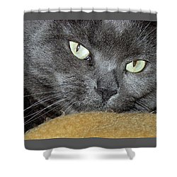 My Nellie-belle's Catitude Shower Curtain