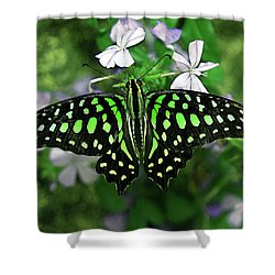 Neon --- Tailed Jay Butterfly Shower Curtain