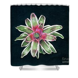 Neoregelia Terrie Bert Shower Curtain