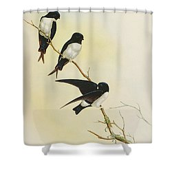 Nepal House Martin Shower Curtain by John Gould