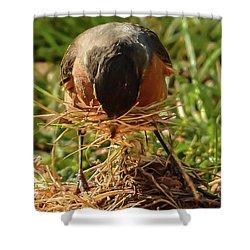 Nest Building Shower Curtain