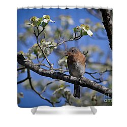 Shower Curtain featuring the photograph Nest Building by Douglas Stucky
