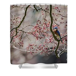 Nest Scouting Shower Curtain