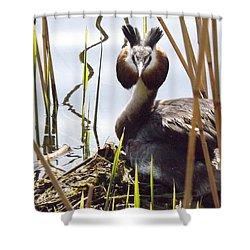 Nesting Grebe Shower Curtain