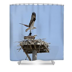 Nesting Osprey In New England Shower Curtain by Erin Paul Donovan