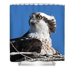 Nesting Osprey Shower Curtain