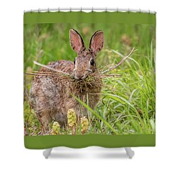 Nesting Rabbit Shower Curtain by Terry DeLuco