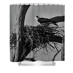 Shower Curtain featuring the photograph Nesting V2 by Douglas Barnard